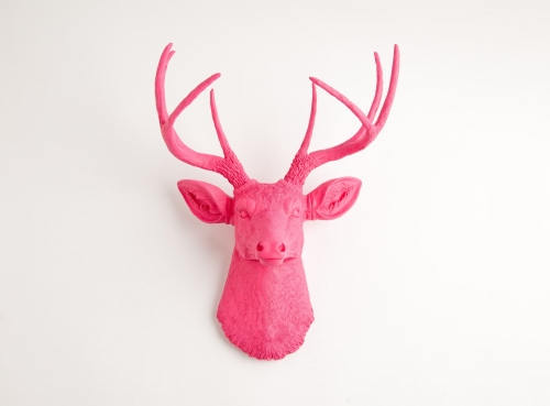 Ragai, antlers, gyvūnų galvos