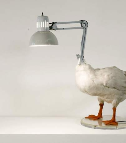 Original lamp design