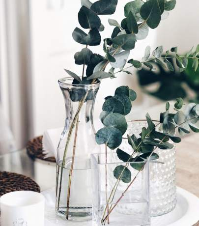 Eucalyptus - trendy interior decor detail