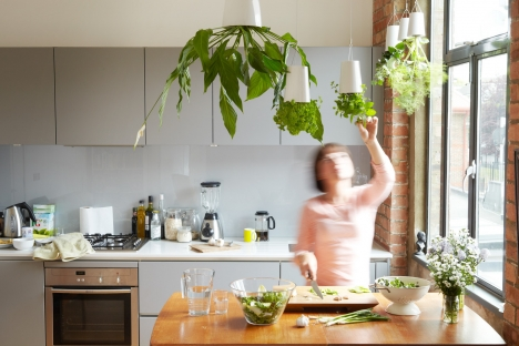 upside down kitchen plants