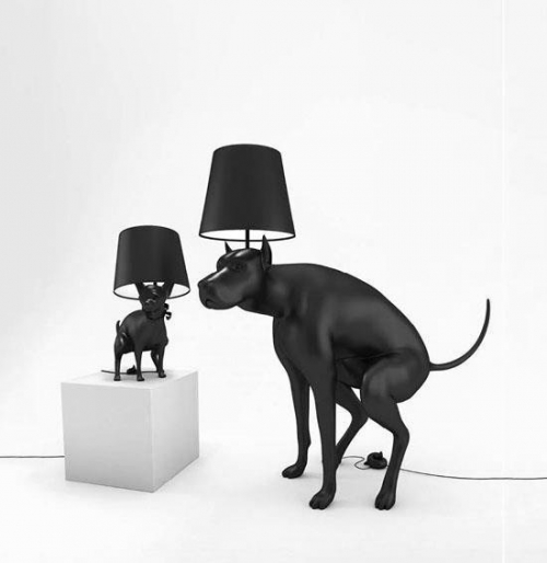 dog lighting