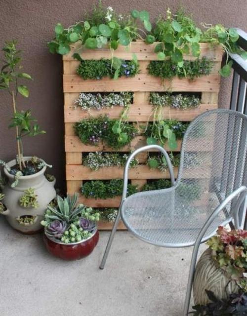 augalų lentynos