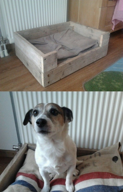 šuns guolis