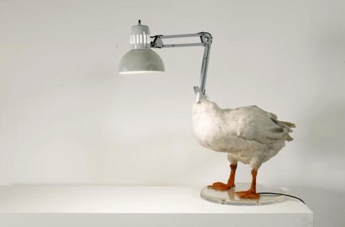 animal head lamp