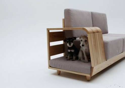 sofa adapted to dogs