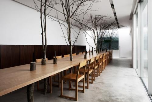 medžiai, augantys iš stalų