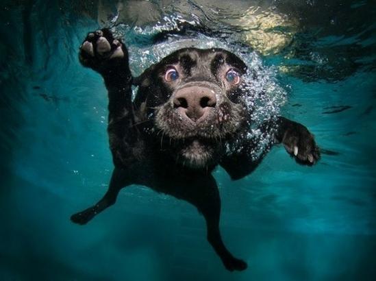 plaukiantis šuo
