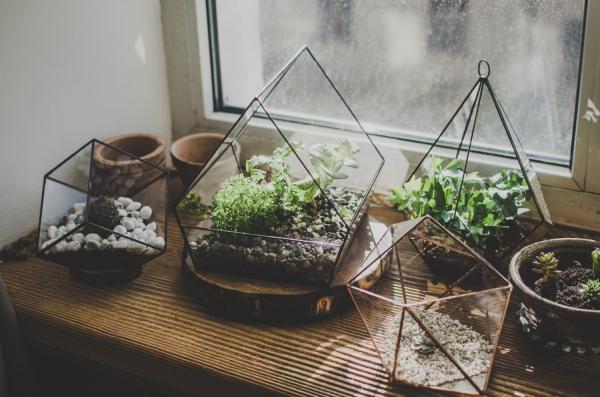 terariumas augalams